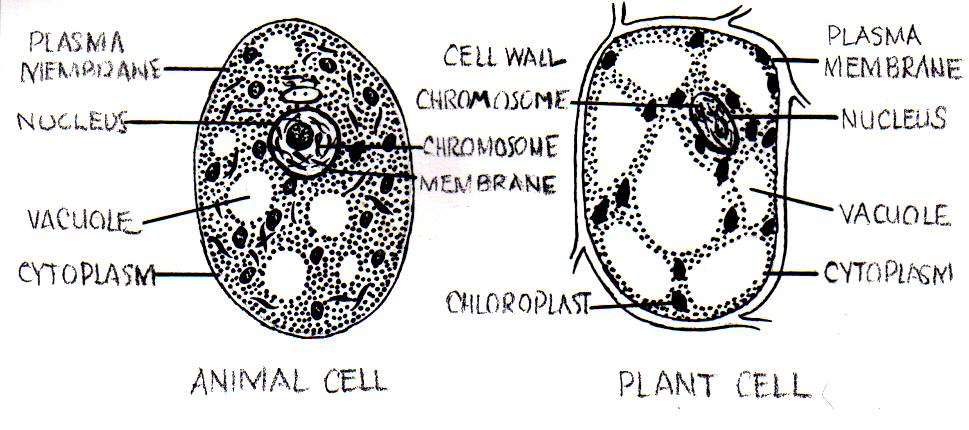 Cell_(PSF).jpg